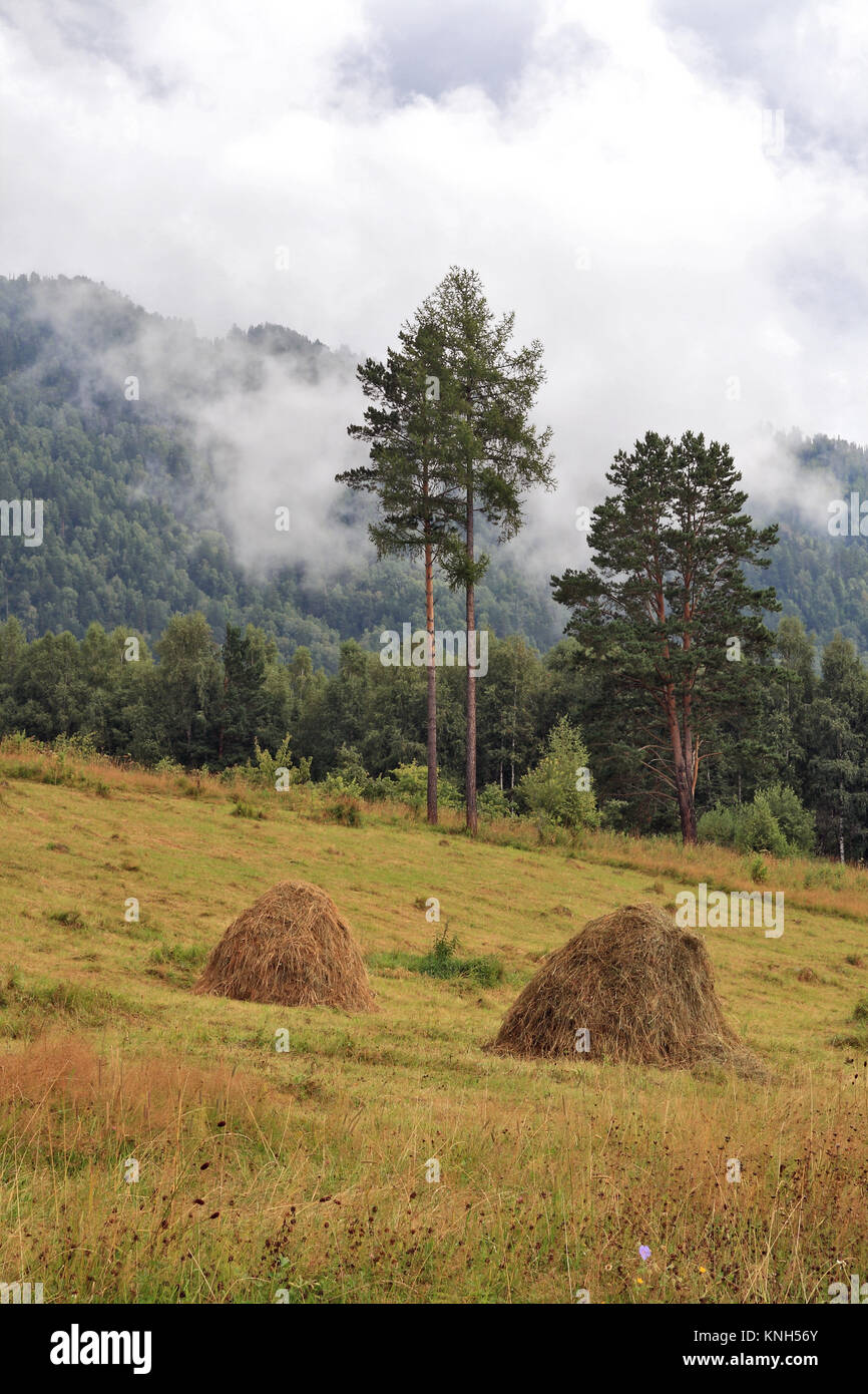 Altai Mountains. The last days of summer - Stock Image