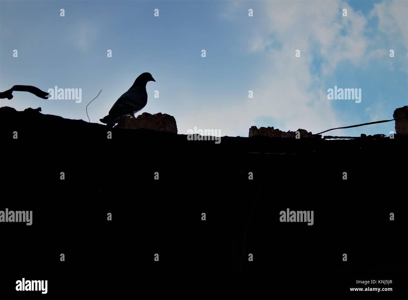 Bird sky black dark bright light darkness crow cloud cloudy blue sky black rook Stock Photo