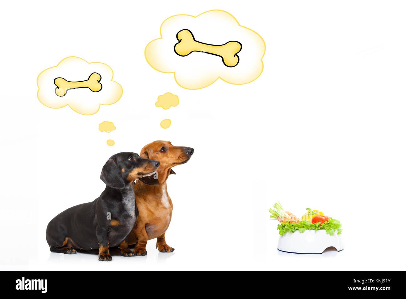 Sausage Dogs Stock Photos & Sausage Dogs Stock Images - Alamy