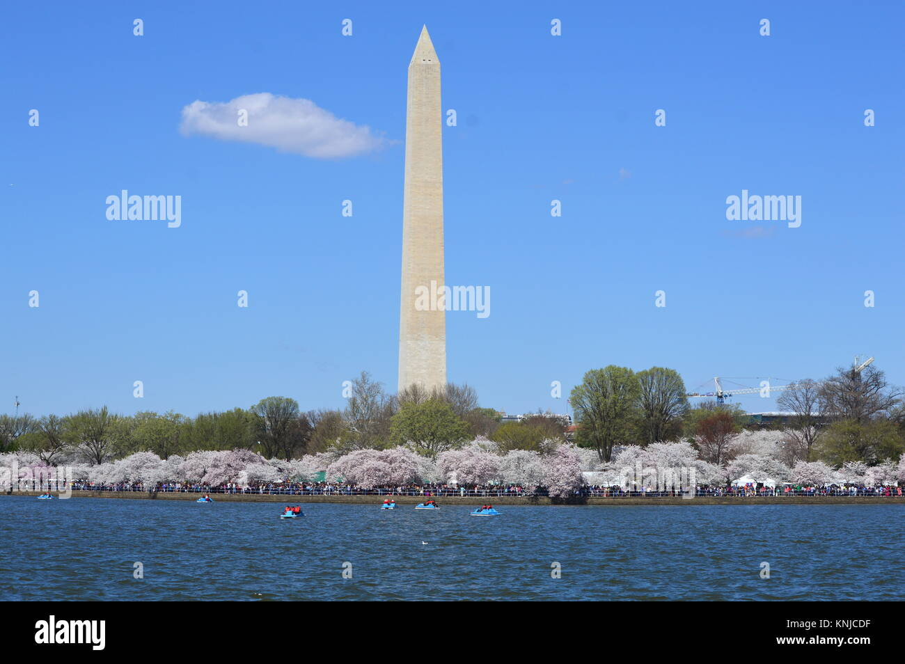Washignton DC, Columbia, USA - April 11, 2015: Washington Monument & Cherry Blossom - Stock Image