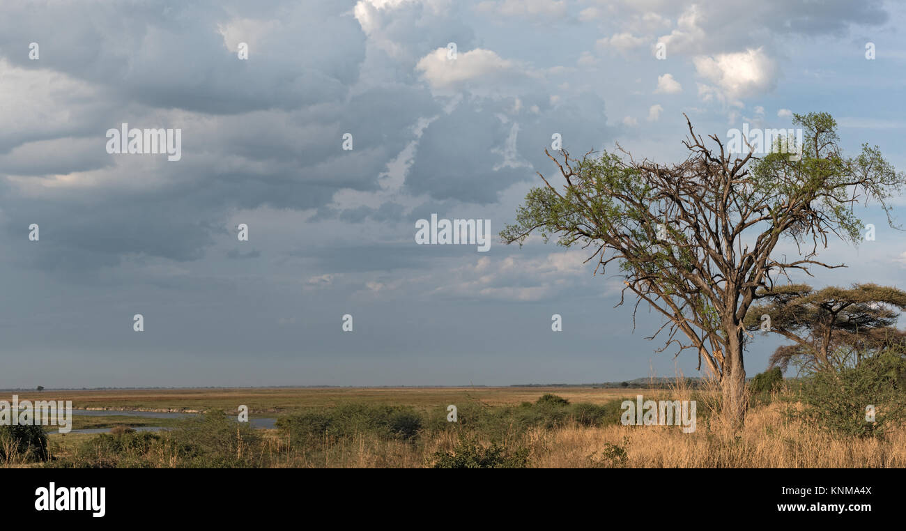 Landscape on the Chobe River in Botswana - Stock Image