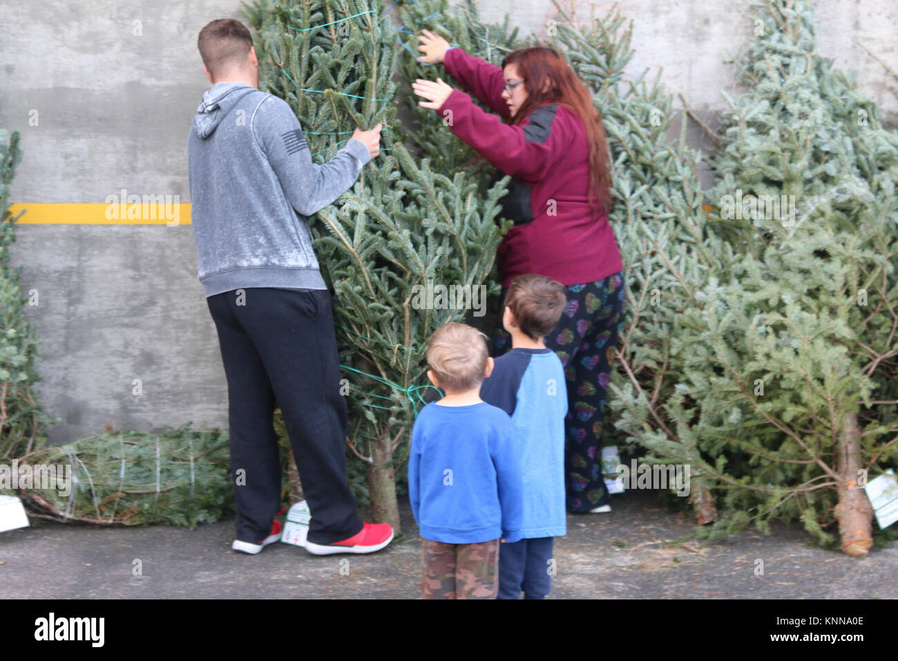 Newman Christmas Trees.A 3rd Infantry Division Family Picks Out A Christmas Tree