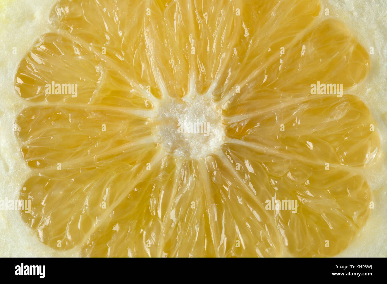 Close up of pulp from a juicy oroblanco fruit full frame - Stock Image
