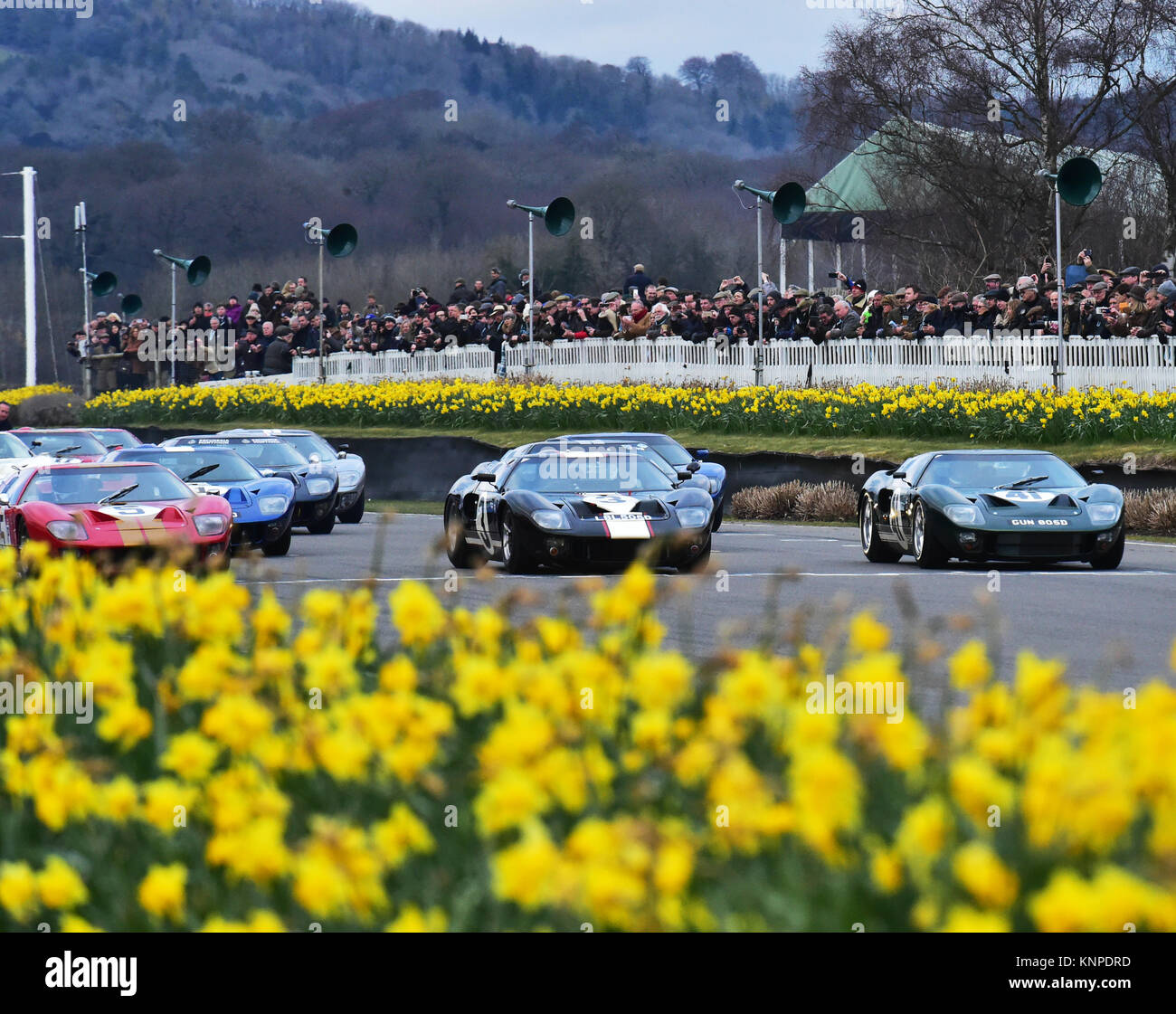 Grid line up, Ford GT40, Alan Mann trophy, Goodwood 74th Members Meeting, cars, Chris McEvoy, circuit racing, CJM Stock Photo