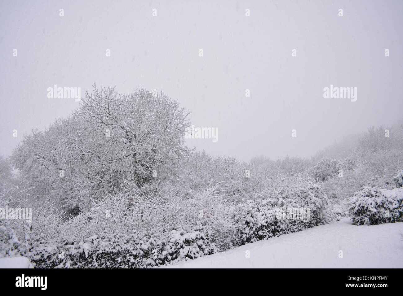 sloping garden with lawn trees and bushes after a very heavy snowfall in winter time and a sky fall of snow yet - Stock Image