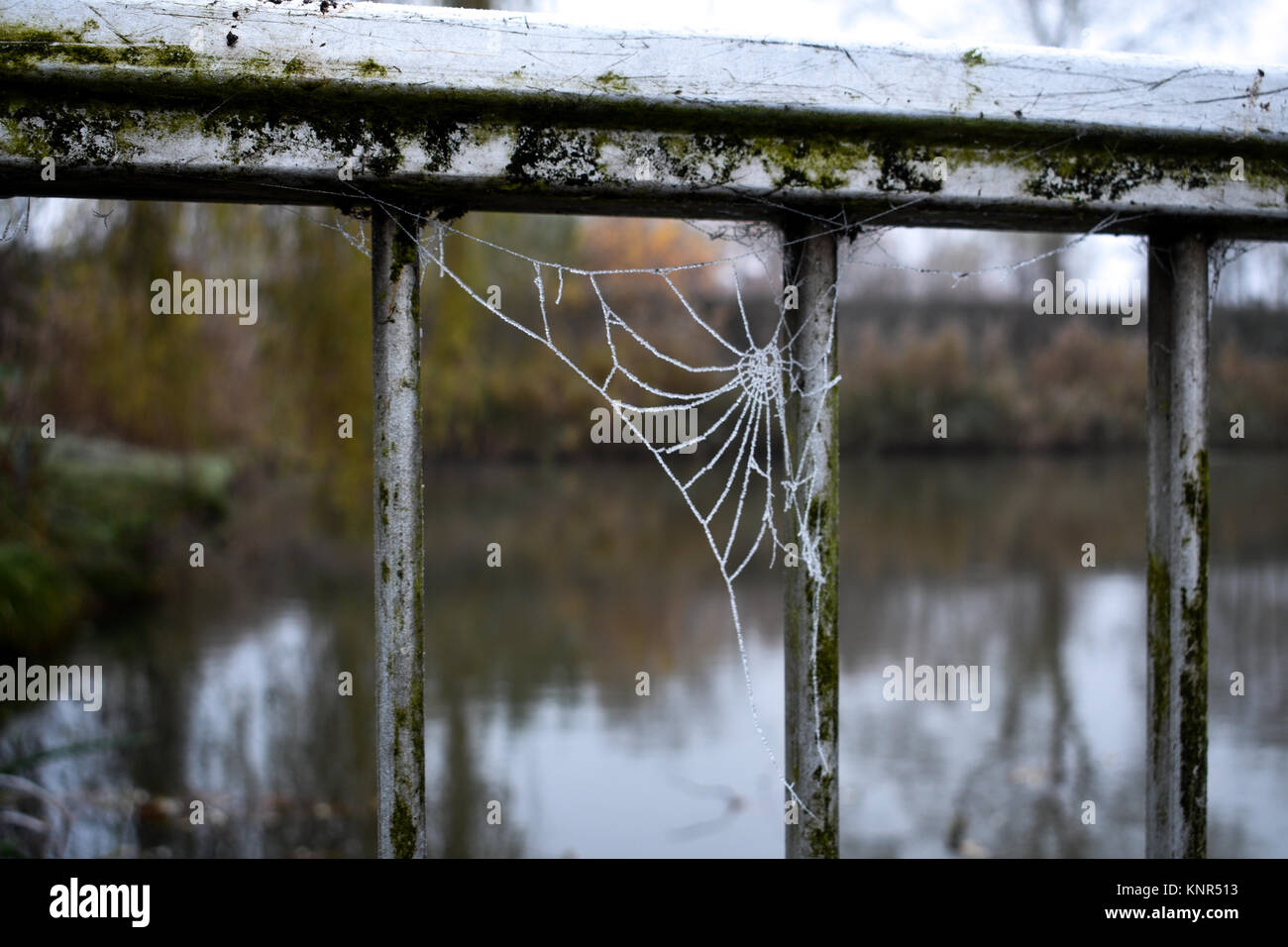 Spider web hidden in the bushes - Stock Image
