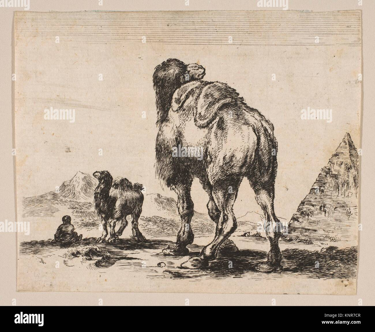 Plate 18: camel viewed from behind with pyramid at right, from 'Various animals' (Diversi animali). Series/Portfolio: - Stock Image