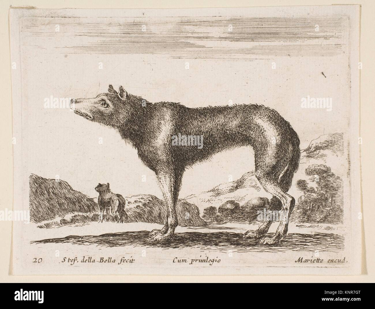 Plate 20: wolf, from 'Various animals' (Diversi animali). Series/Portfolio: 'Various animals' (Diversi - Stock Image