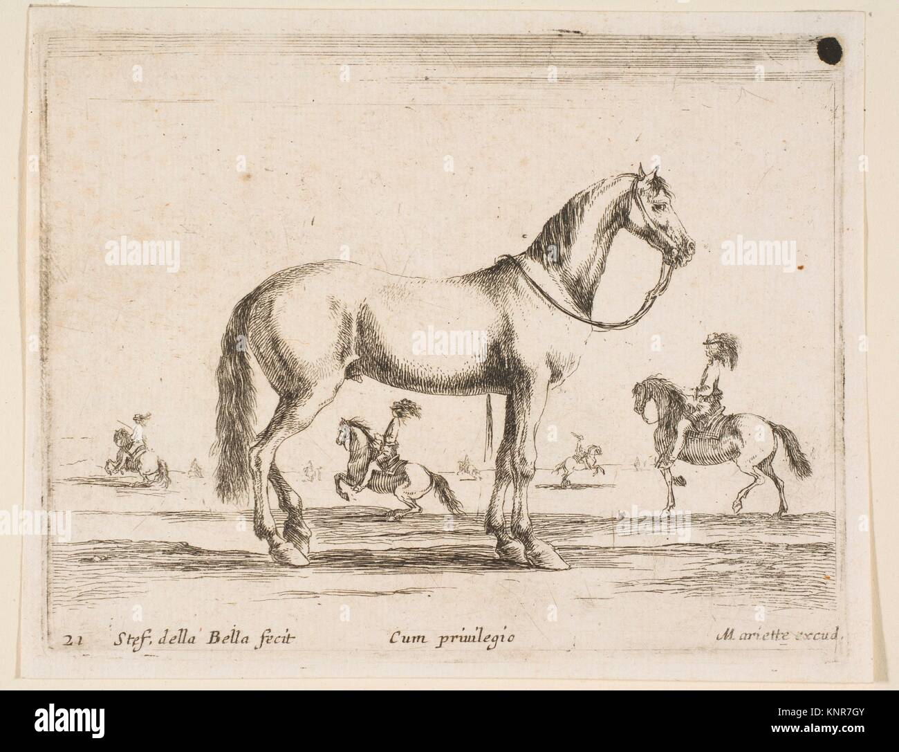 Plate 21: horse, from 'Various animals' (Diversi animali). Series/Portfolio: 'Various animals' (Diversi - Stock Image