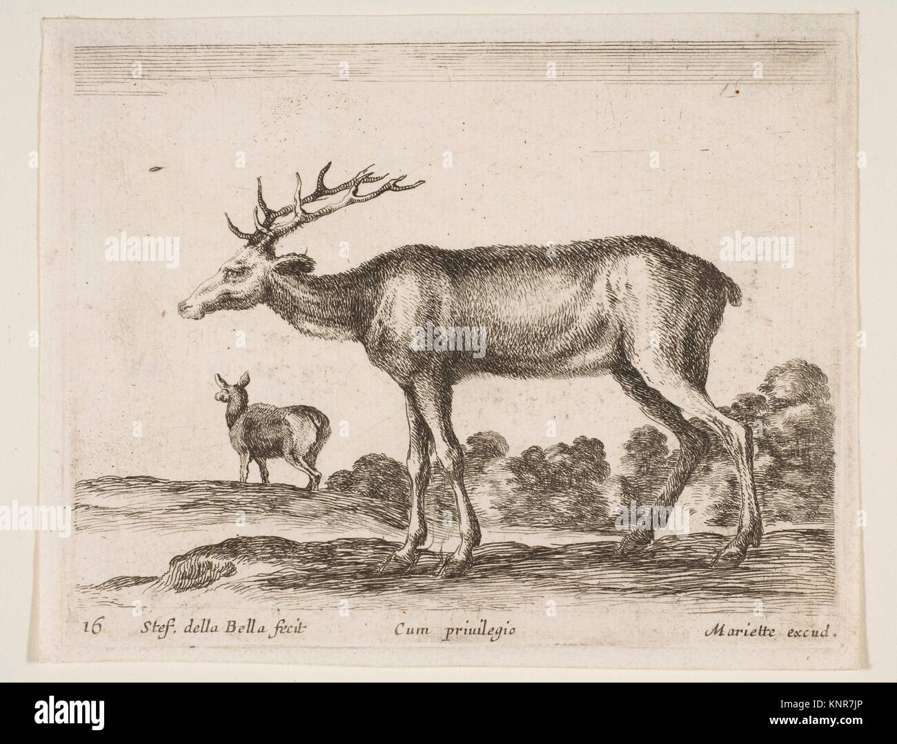 Plate 16: stag, from 'Various animals' (Diversi animali). Series/Portfolio: 'Various animals' (Diversi - Stock Image