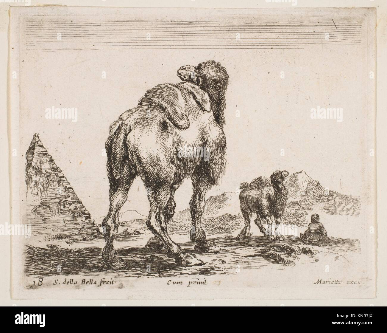 Plate 18: camel viewed from behind with pyramid at left, from 'Various animals' (Diversi animali). Series/Portfolio: - Stock Image