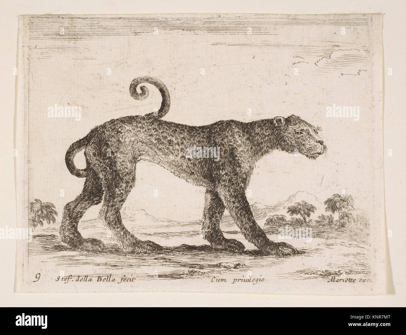 Plate 9: leopard, from 'Various animals' (Diversi animali). Series/Portfolio: 'Various animals' - Stock Image