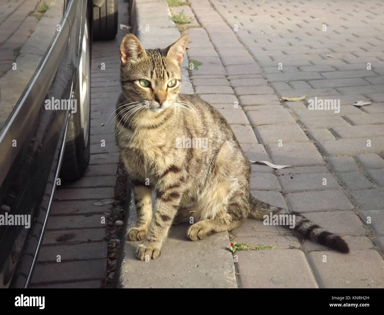 Beautiful cat on the streets of Tanger, Morocco Stock Photo