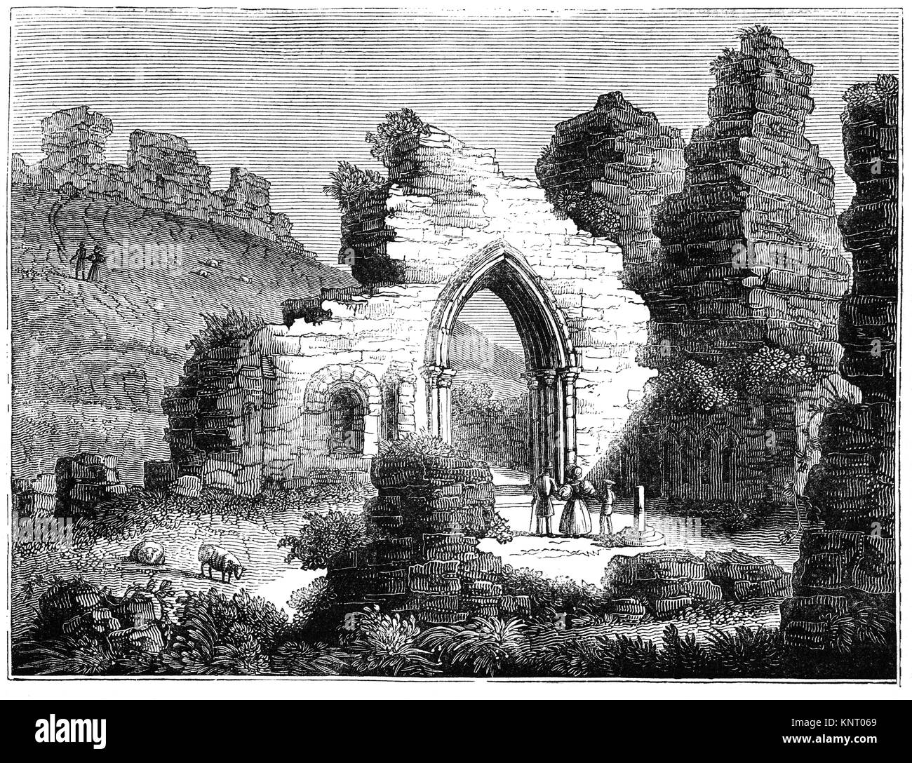 Sheep and visitors amidst the ruined 11th Century Norman walls of St Mary's Chapel below the Castle of Hastings, - Stock Image