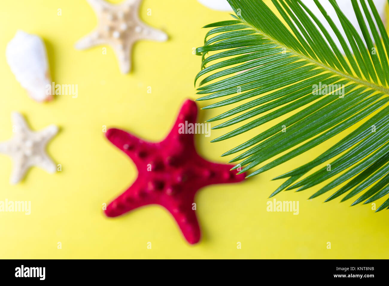 Tropical Background Palm Trees Branches with blurred starfish on yellow background. Holiday. Travel. Copy space - Stock Image