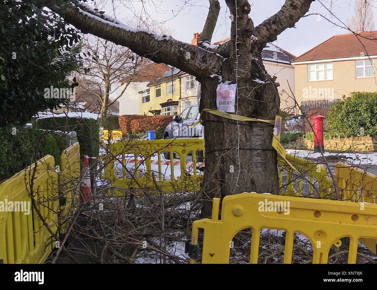 A tree which has been cut down in Abbeydale Park Rise, in Dore, Sheffield, as part of the local council's controversial - Stock Image