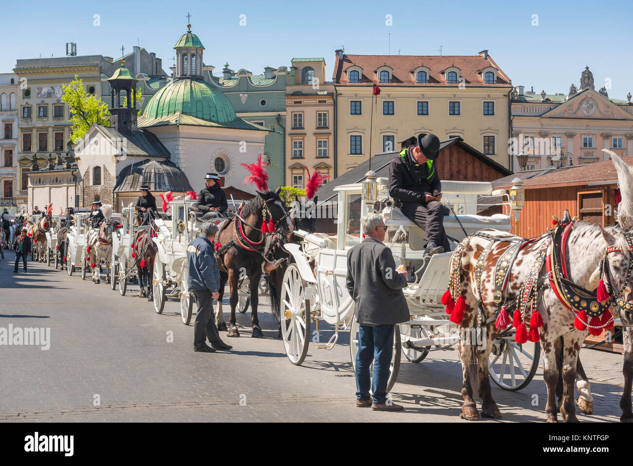 Krakow carriage, horse-drawn carriages available for tours of the city of Krakow line up in the city's Market - Stock Image