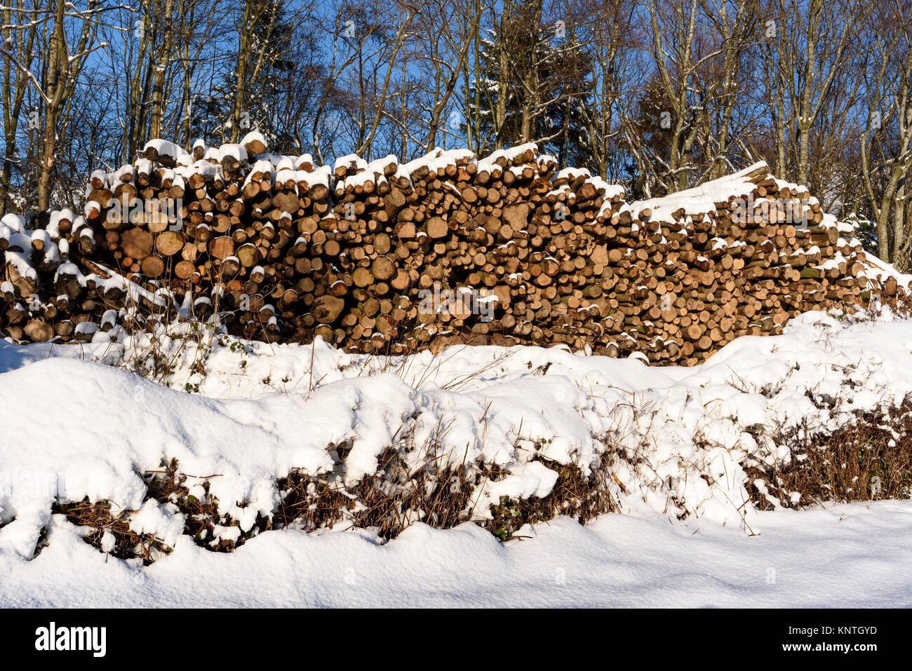 Snowy scene North Wales logs logpile - Stock Image