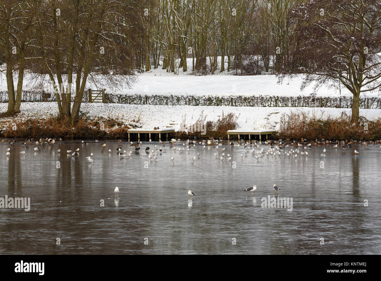 A wintery, snowy view of the icy Arrow Valley Lake, with the ducks