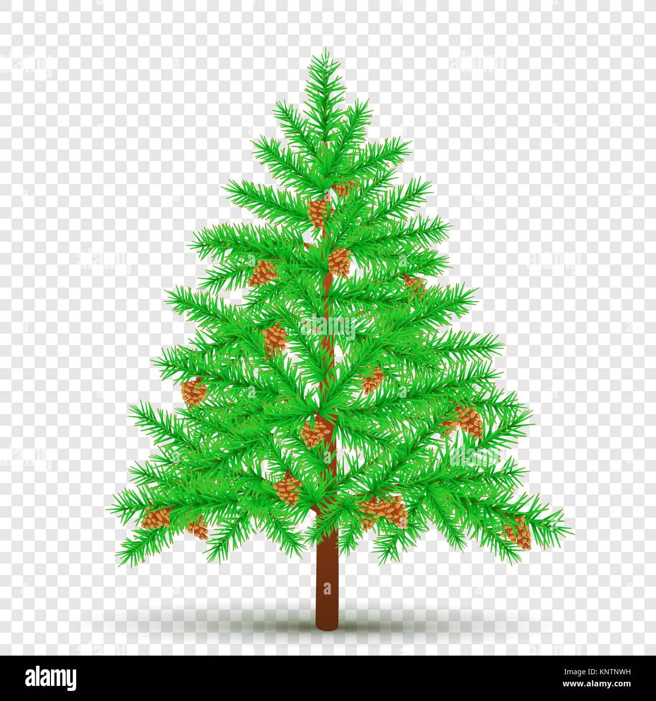 spruce with cones transparent background - Stock Vector
