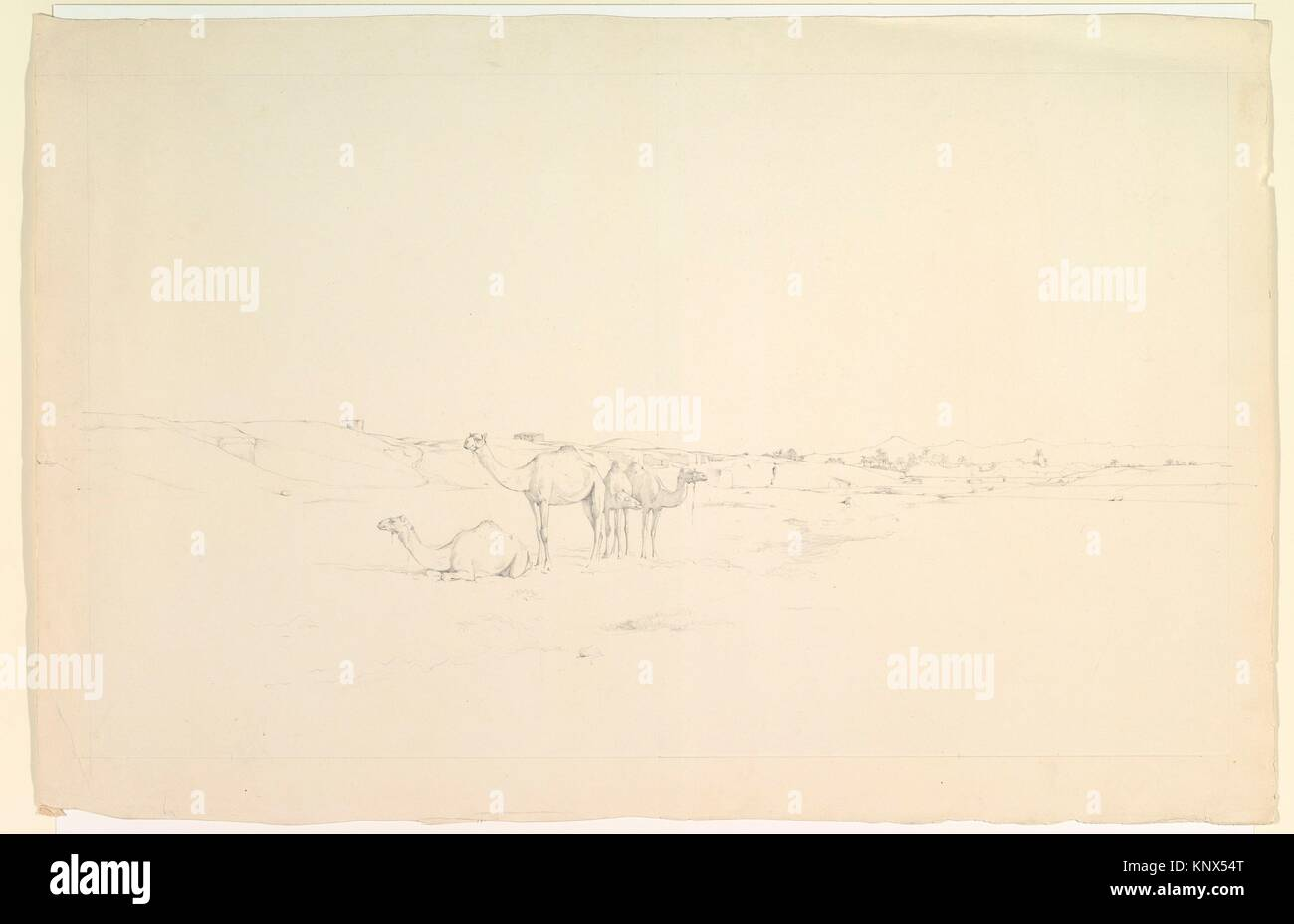 Camels in a landscape. Artist: Howard Carter (British, London 1873-1939 London); Date: late 19th-mid-20th century; - Stock Image