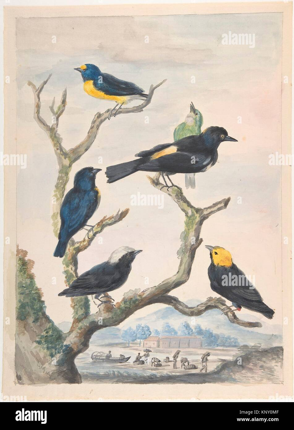Six South American Birds. Artist: Abraham Meertens (Dutch, 1747-1823); Date: mid-18th-early 19th century; Medium: - Stock Image