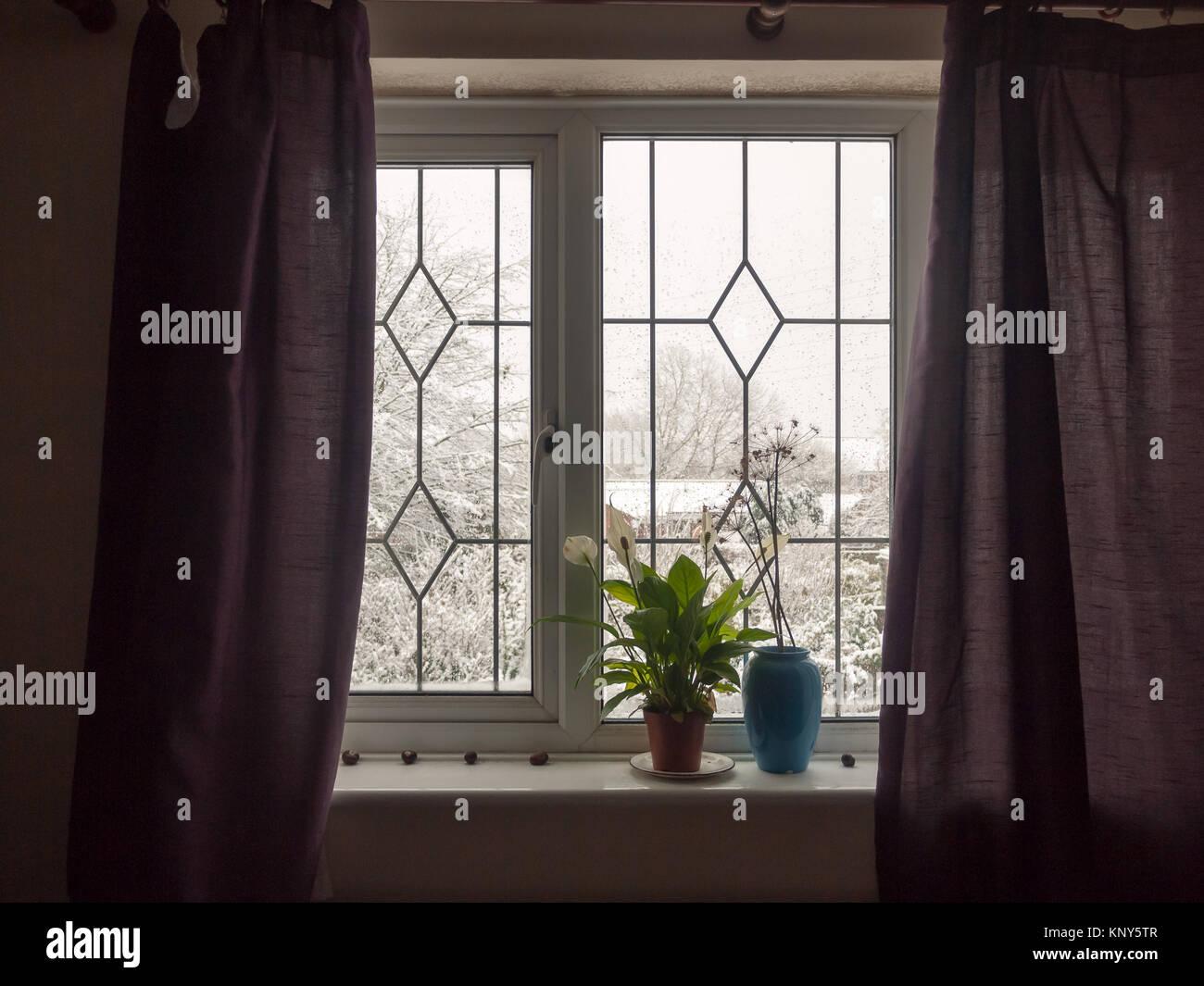 inside curtains window house room windowsill plant blue vase ...