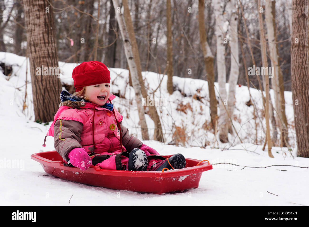 A laughing little girl (3 yr old) sledging in Quebec - Stock Image