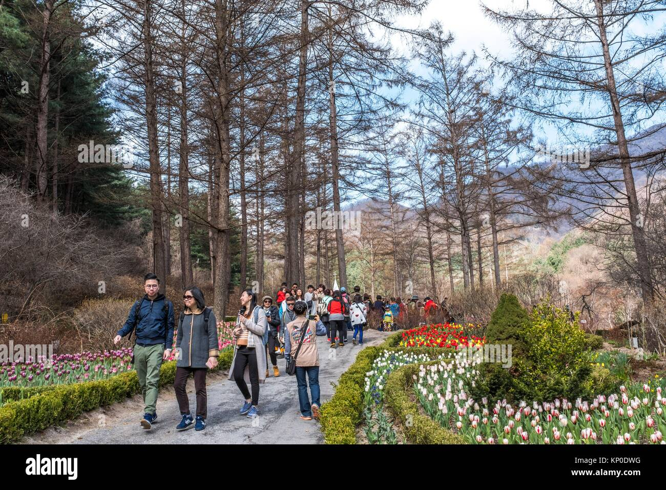 The Trees And Grounds Of The Garden Of The Morning Calm In Gapyeong ...