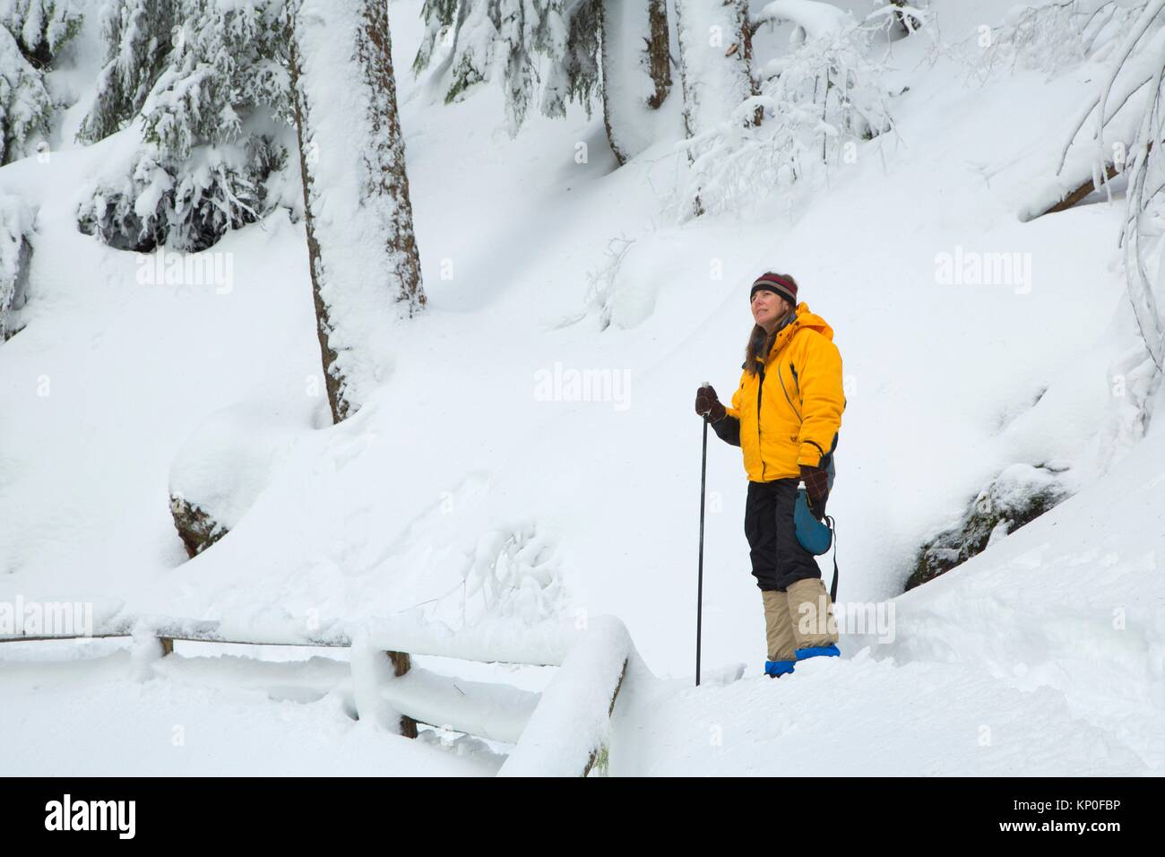 Snowshoeing along Salt Creek Falls Trail, Willamette National Forest, Oregon. - Stock Image