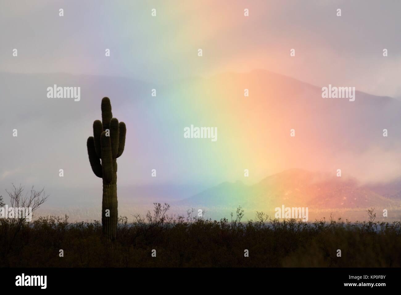 Rainbow with saguaro, Maricopa County, Arizona. - Stock Image