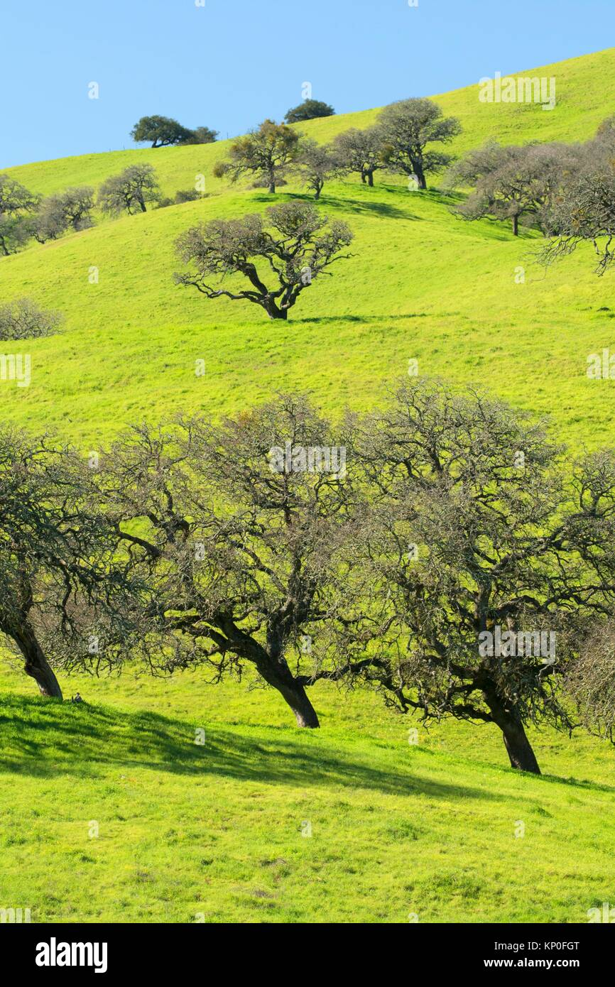 Oak woodland, Pacheco State Park, California. - Stock Image