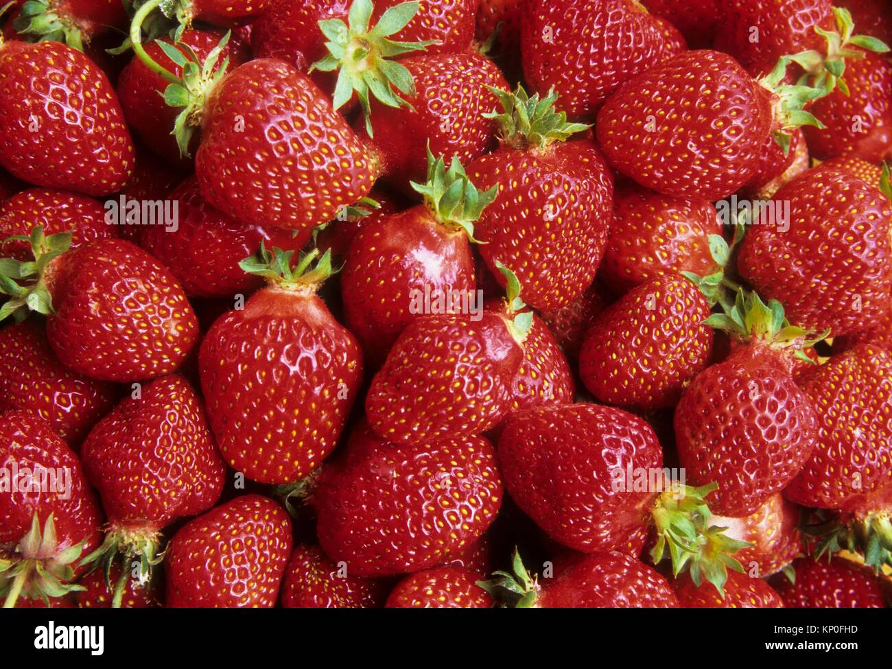 Thank You Berry Much Farms