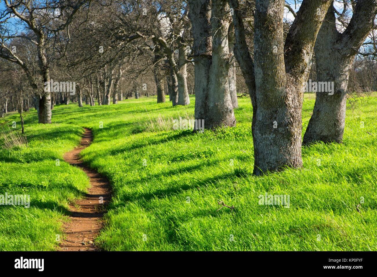 Oak woodland hiking trail, Sacramento River Bend Area of Critical Environmental Concern, Paynes Creek Wildlife Area, - Stock Image
