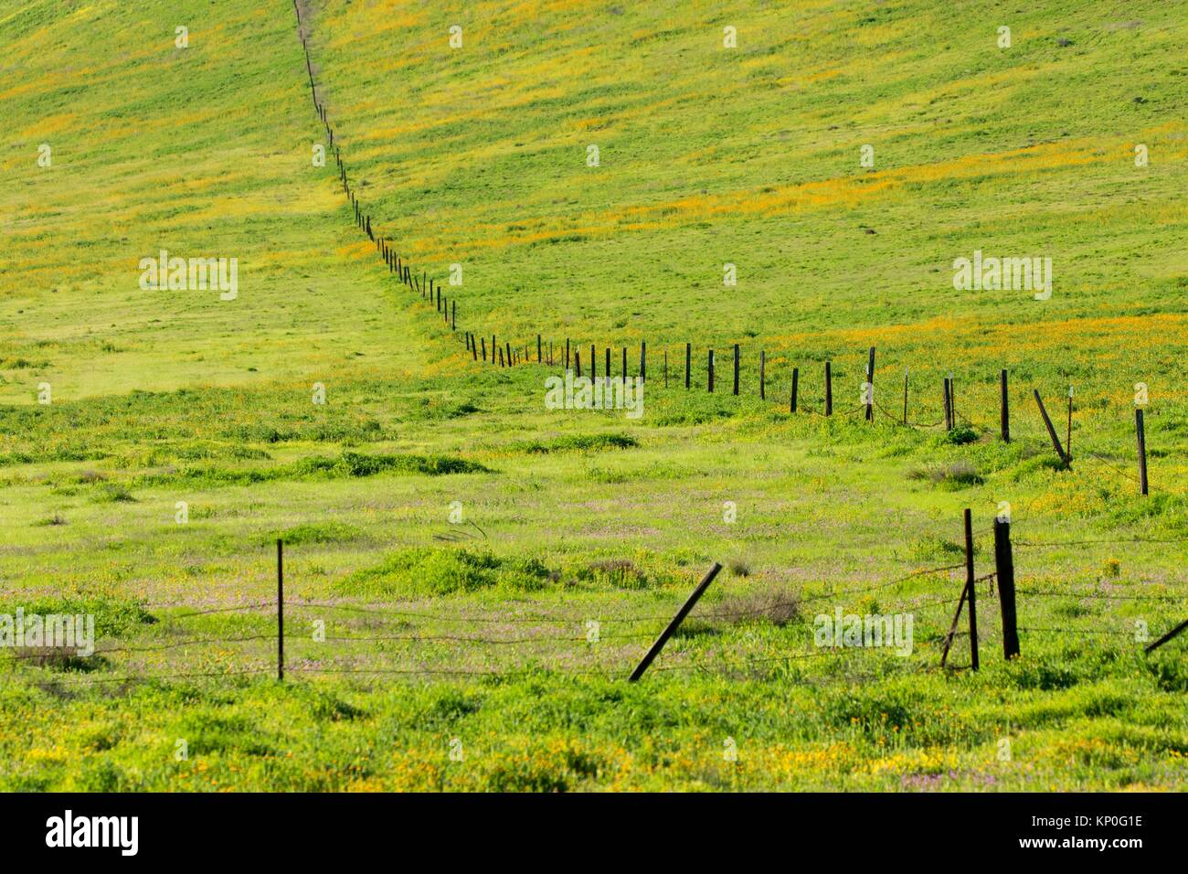 Ranch fence, Carrizo Plain National Monument, California. - Stock Image