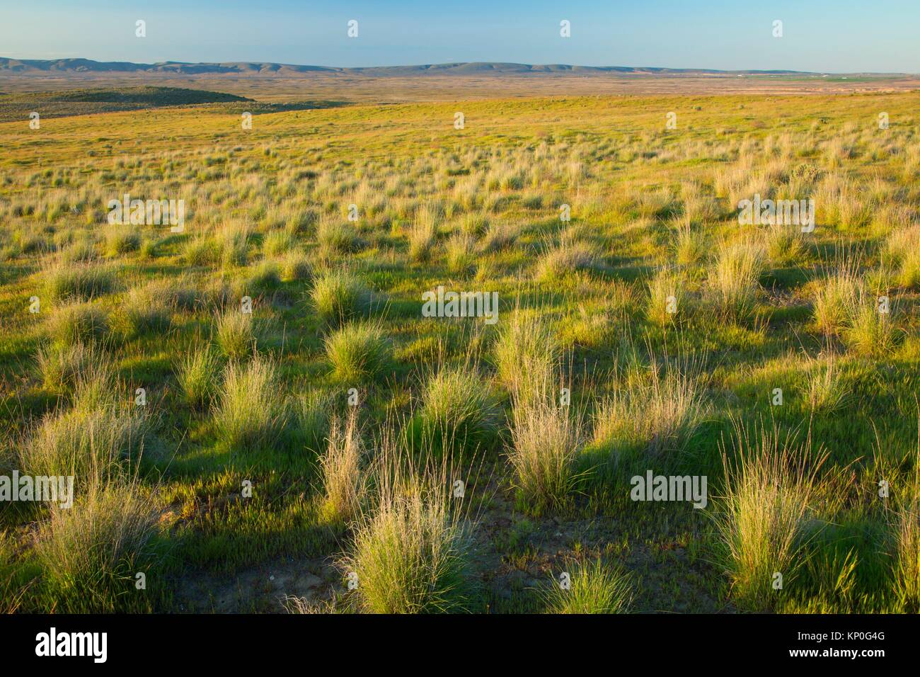 Grassland, Hanford Reach National Monument, Washington. - Stock Image