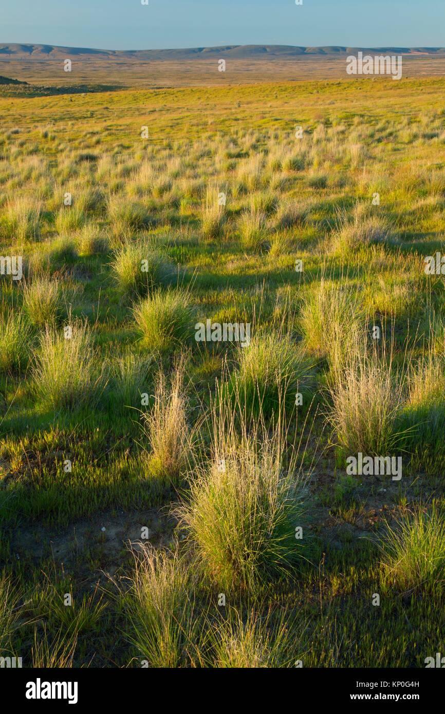 Grassland, Hanford Reach National Monument, Washington. - Stock Image