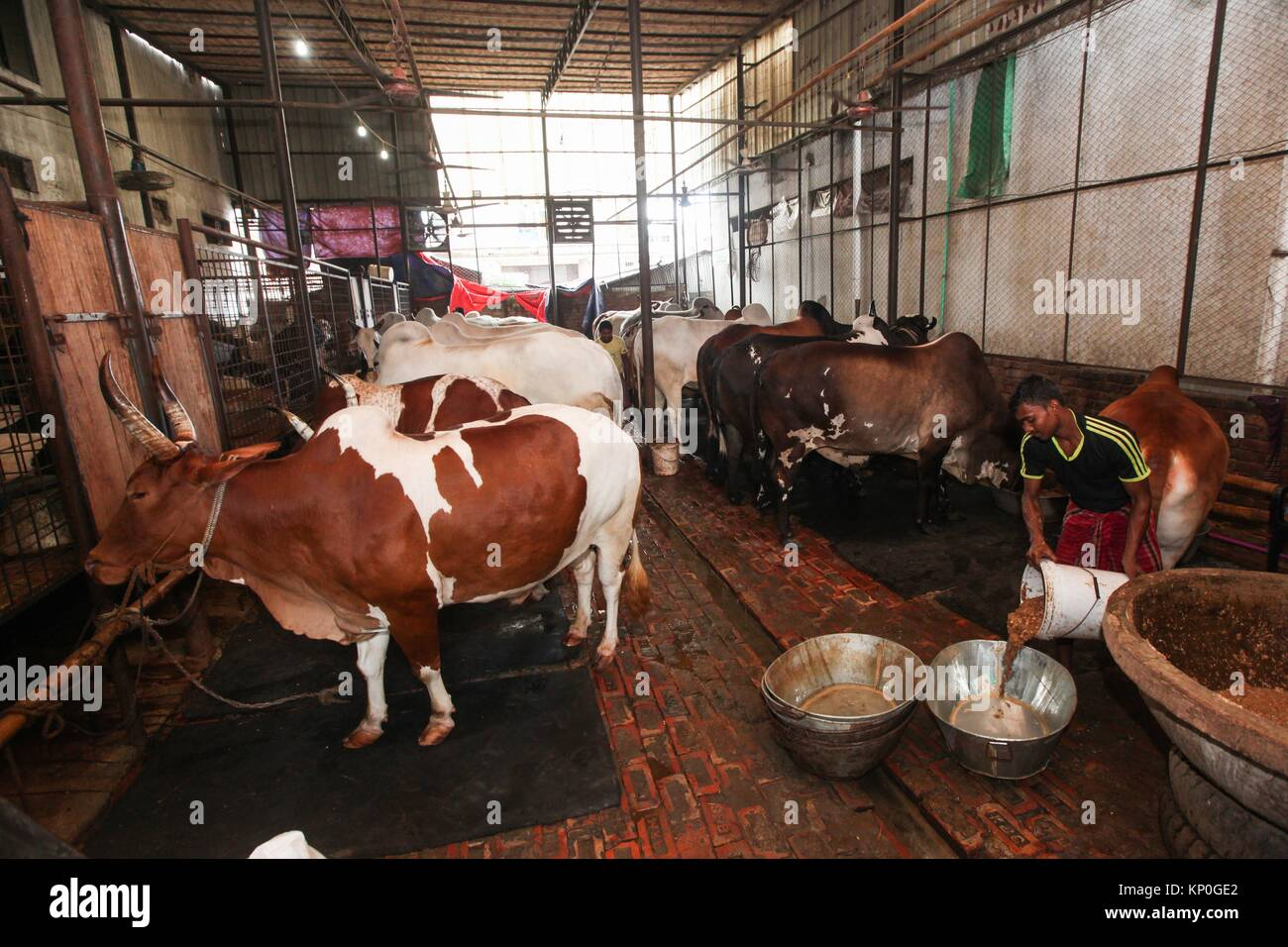 A busy cattle market in Dhaka city, on the eve of Eid-ul-Adha, the annual Muslim festival that commemorates the Stock Photo