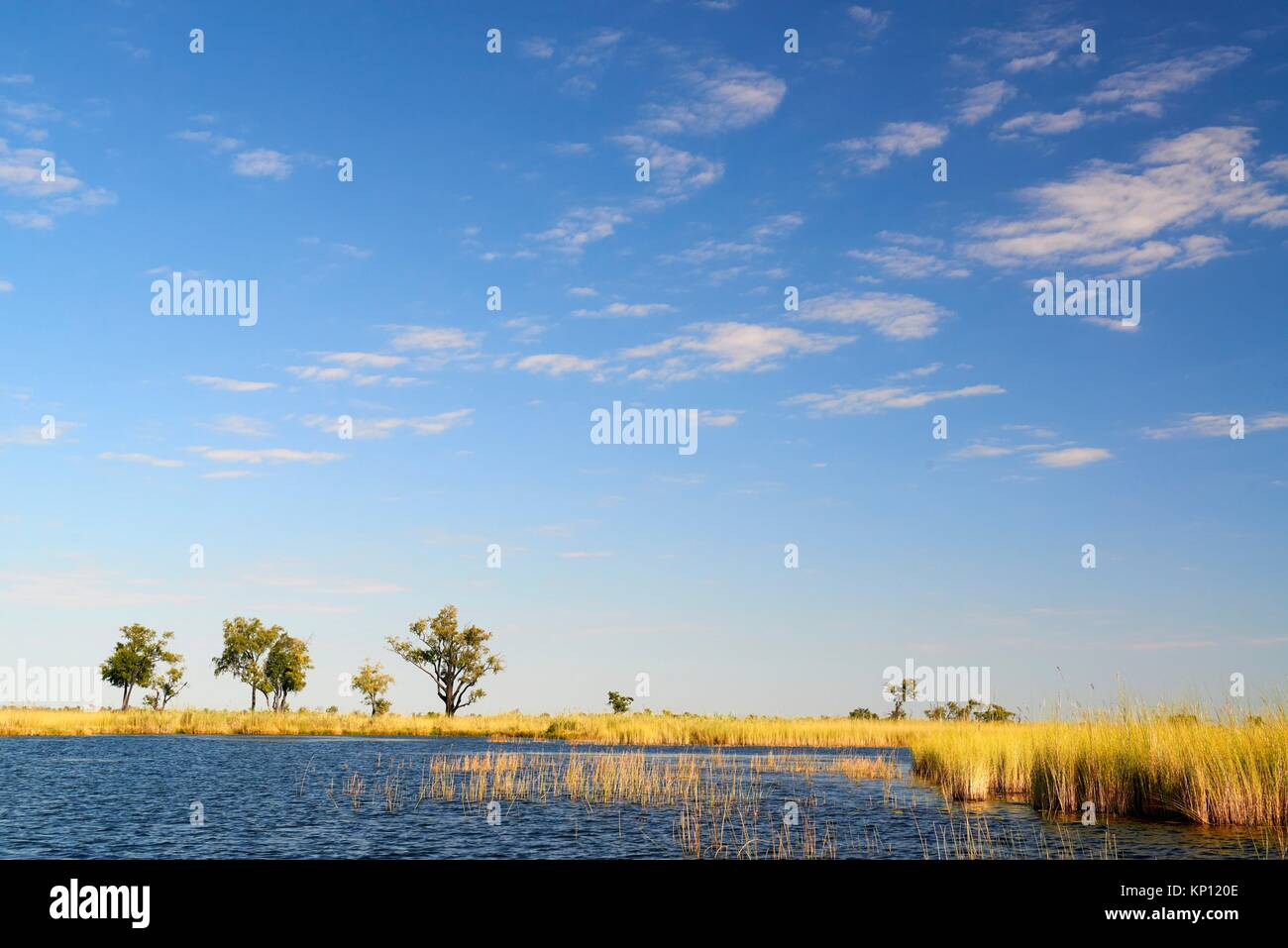 Landscape with water channel and high grass, Moremi National Park, Okavango Delta, Botswana, Southern Africa. - Stock Image
