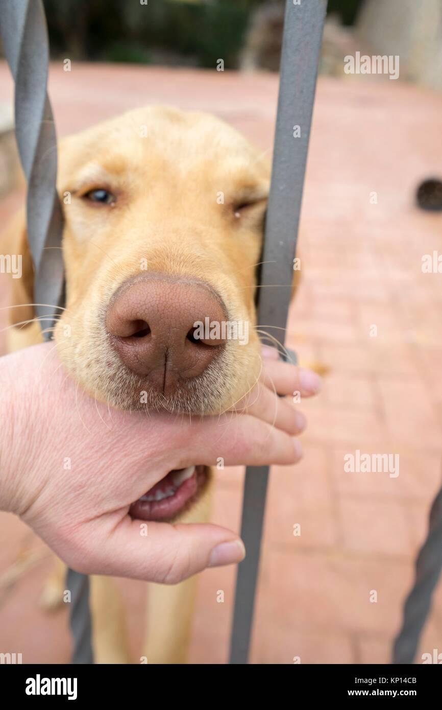 The dog bites the hand of the trespasser, Valencia, Spain, Europe - Stock Image