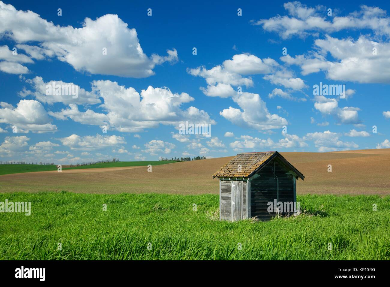 Palouse shed, Whitman County, Washington. - Stock Image
