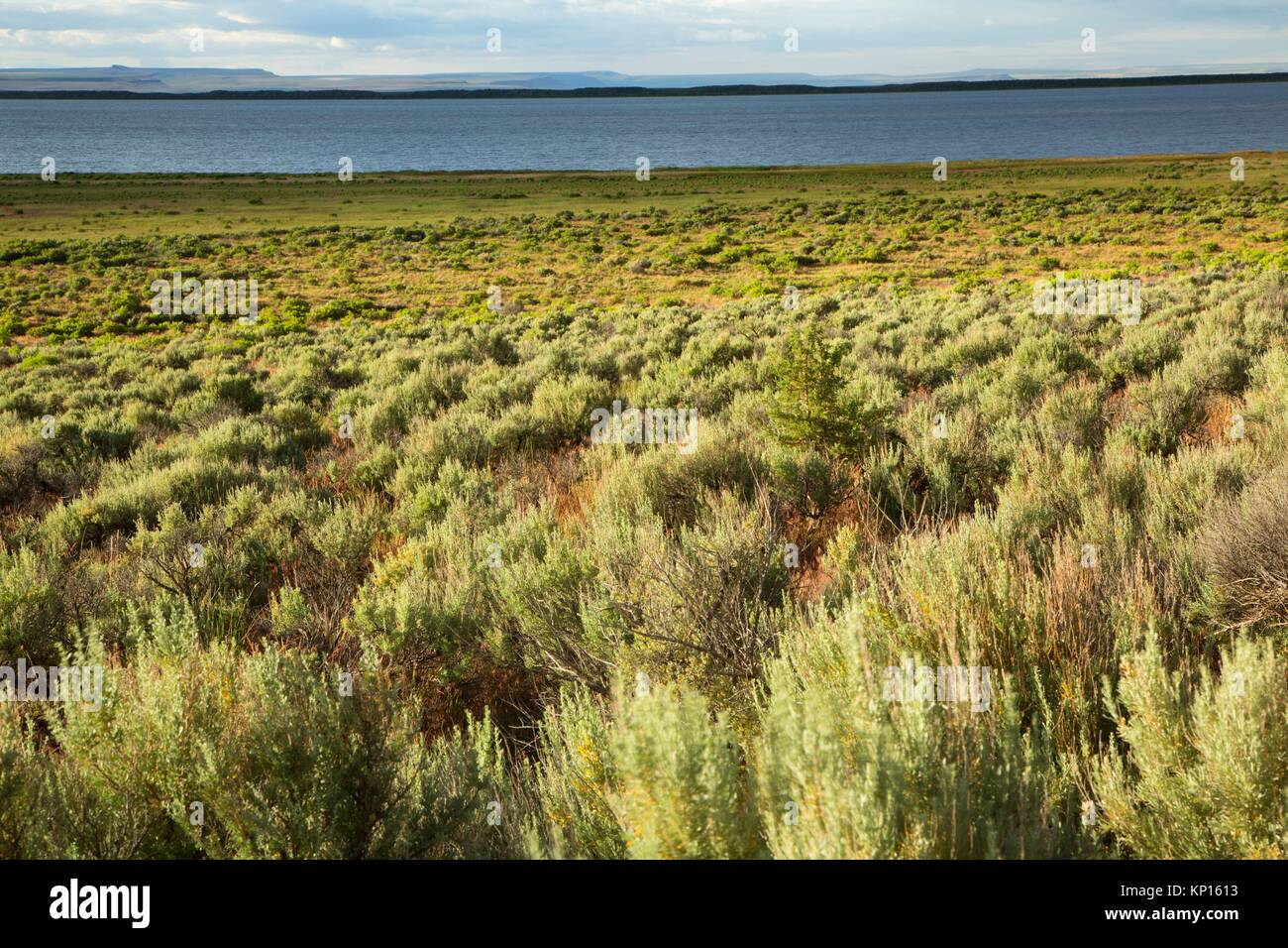 Sagebrush at Campbell Lake, Warner Wetlands Area of Critical Environmental Concern, Lakeview to Steens National - Stock Image