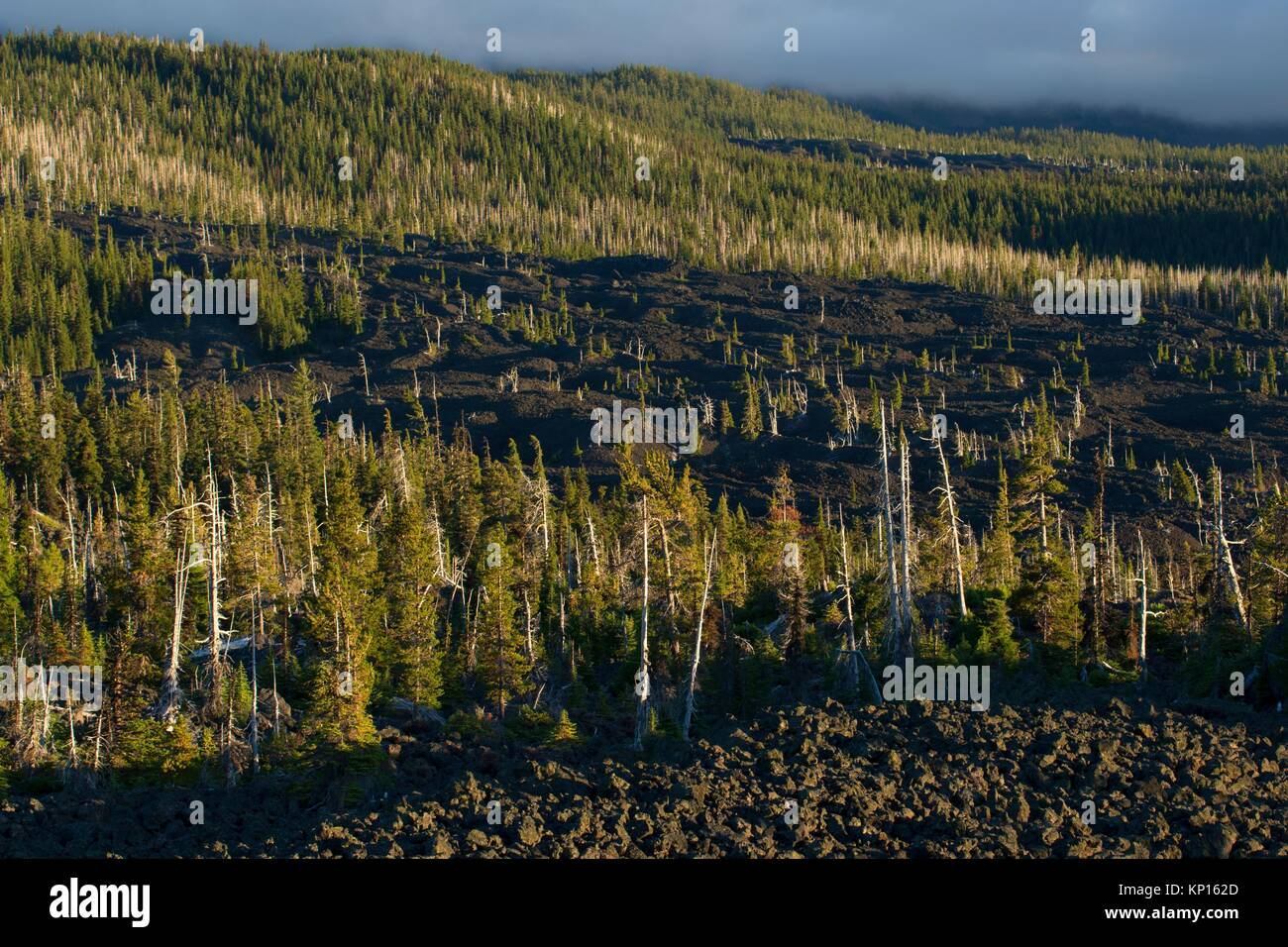 Lava flow from Dee Wright Observatory, McKenzie Pass-Santiam Pass National Scenic Byway, Willamette National Forest, - Stock Image