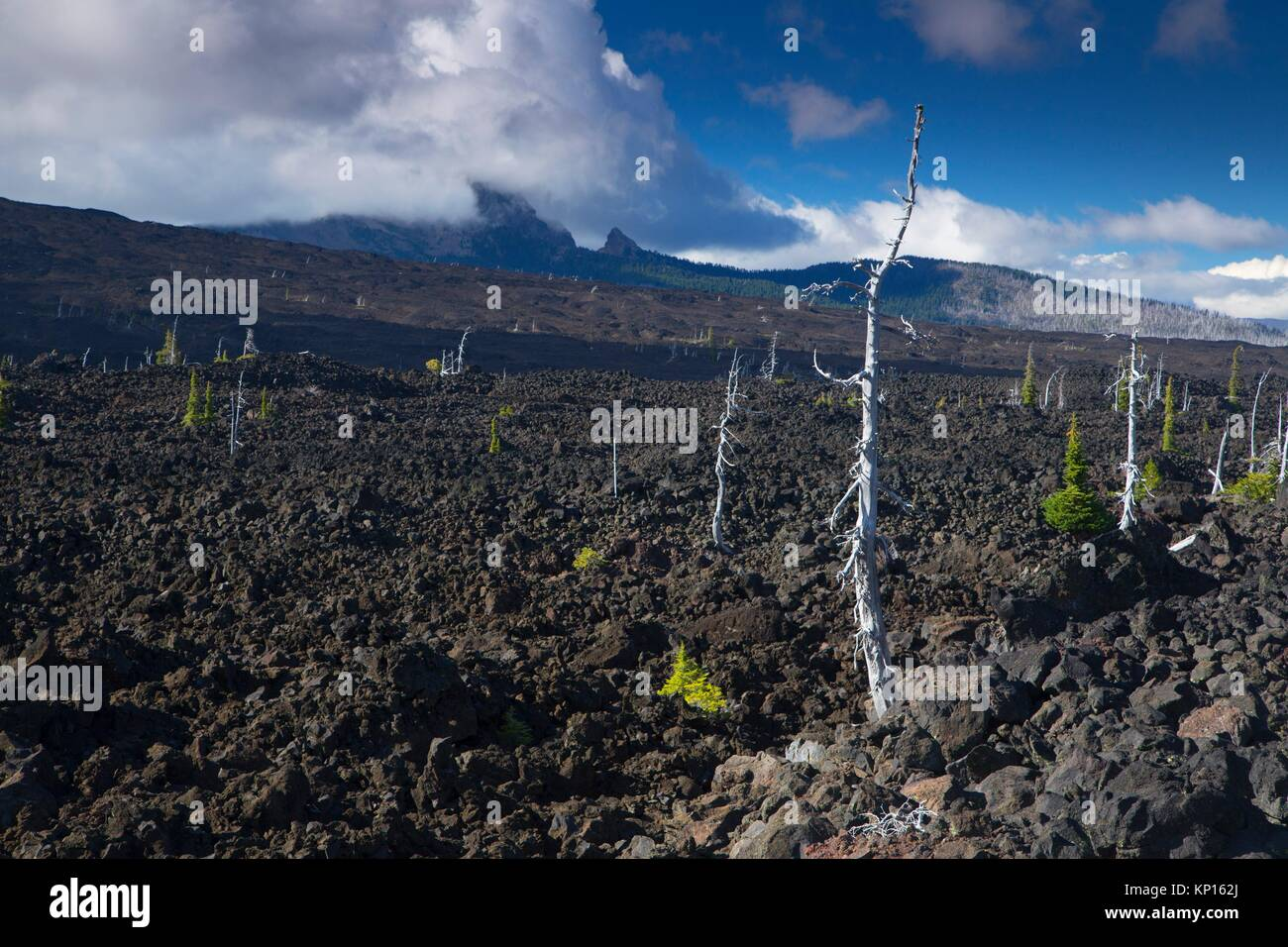 Lava flow on Lava River National Recreation Trail, McKenzie Pass-Santiam Pass National Scenic Byway, Willamette - Stock Image