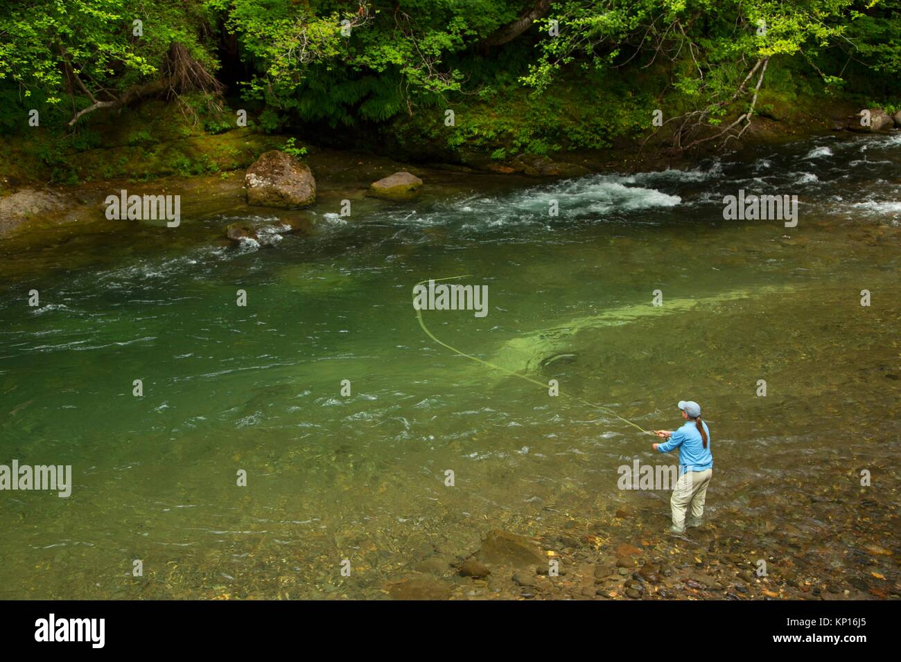 Fly fishing the Lewis River, Gifford Pinchot National Forest, Washington. - Stock Image