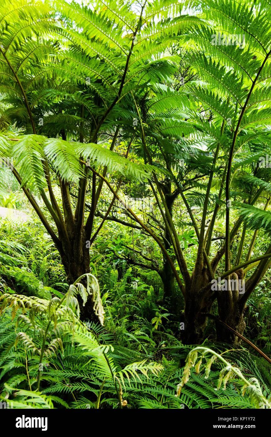 Ferns in botanical gardens, Wanhua, Taipei, Taiwan - Stock Image