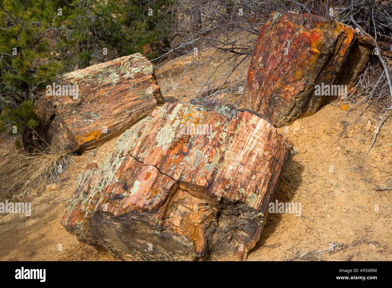 petrified wood scenery