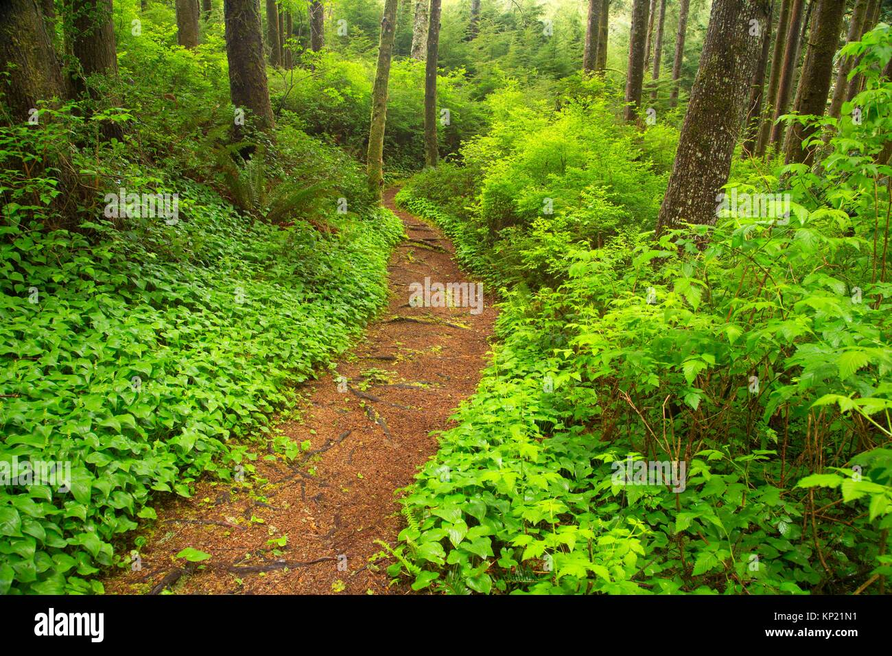 Hiking trail, Spring Lake Open Space, Lincoln City, Oregon. - Stock Image
