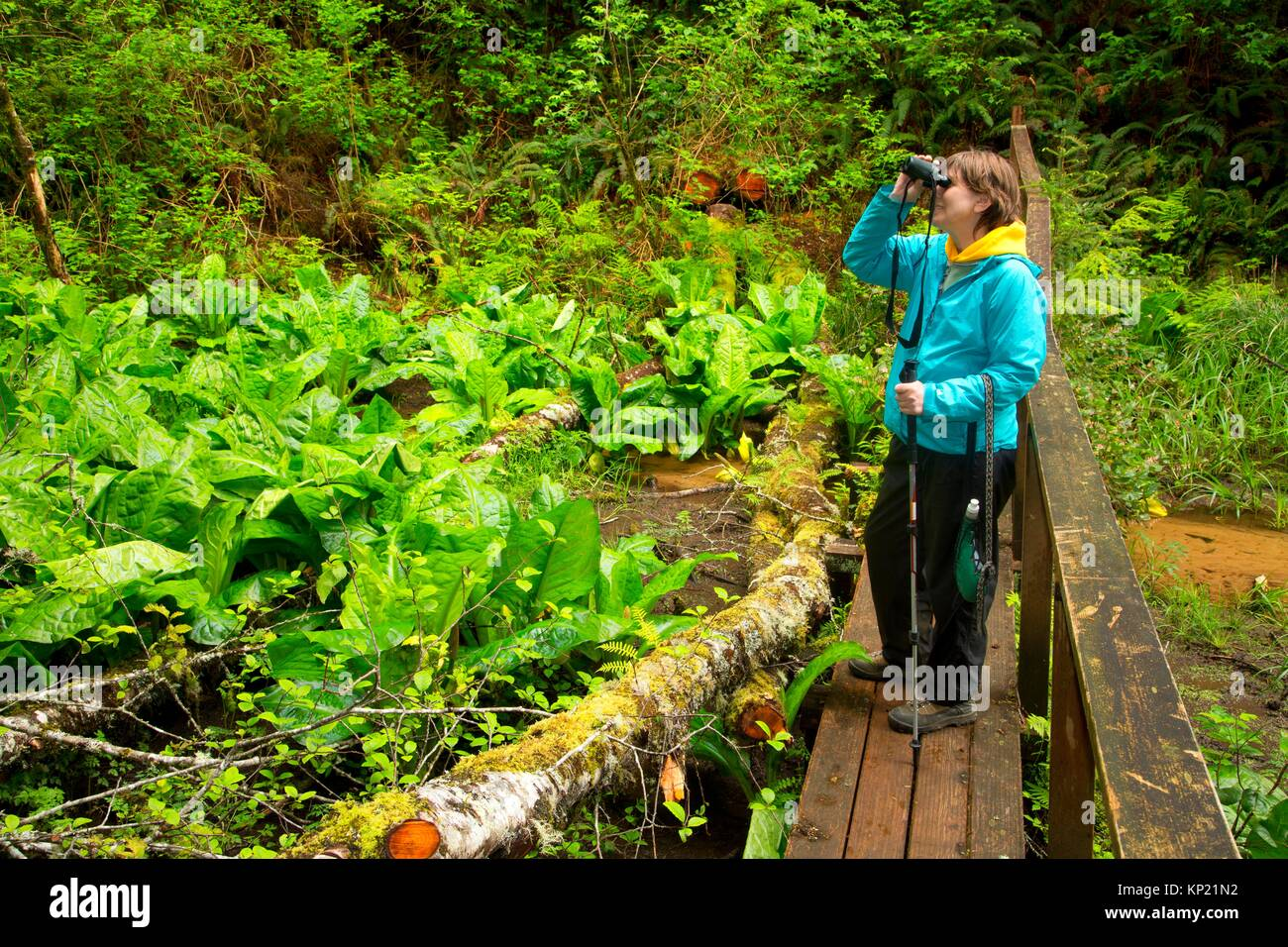 Birding from hiking trail bridge, Spring Lake Open Space, Lincoln City, Oregon. - Stock Image