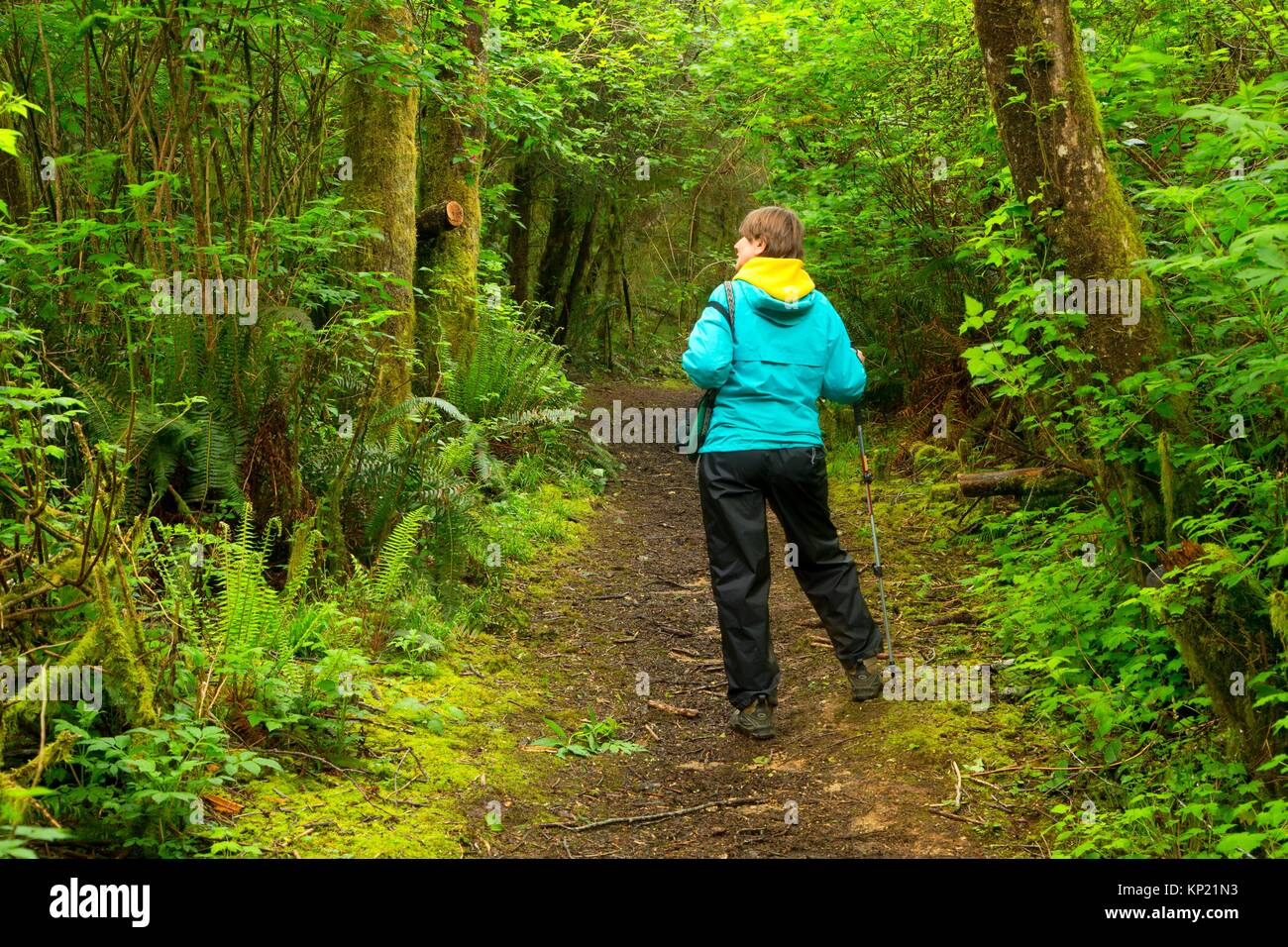Hiking trail, Friends of Wildwoods Open Space, Lincoln City, Oregon. - Stock Image